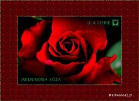 eKartki Z okazji Dnia Imieninowa róża,