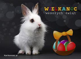 eKartki Wielkanoc Królik Wielkanocny,