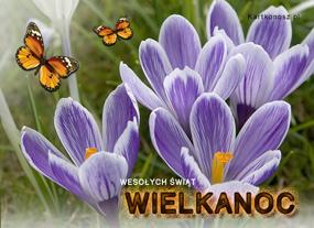 eKartki Wielkanoc Wielkanocne motyle,
