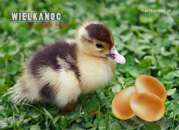 Wielkanocna kaczuszka