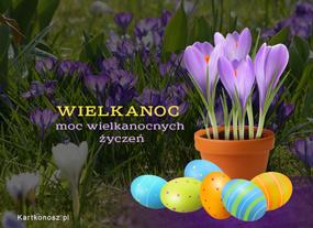 eKartki Wielkanoc Krokusy i zyczenia,
