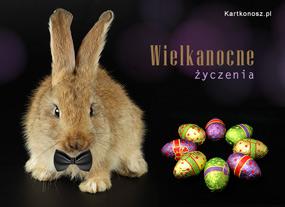 eKartki Wielkanoc Świąteczny Zając,