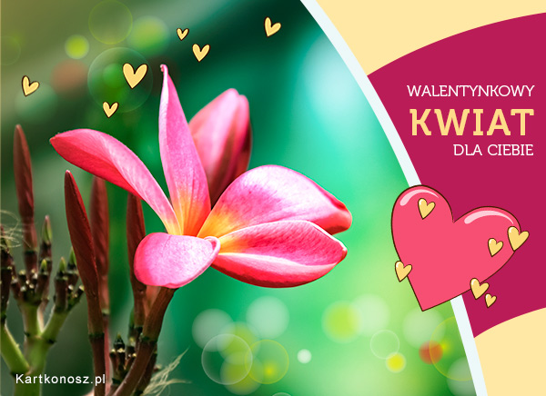 Walentynkowy kwiat