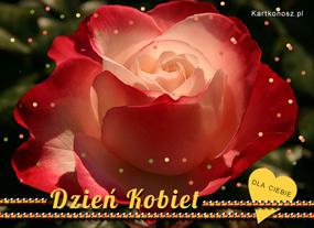 eKartki Z okazji Dnia Kartka z różą,