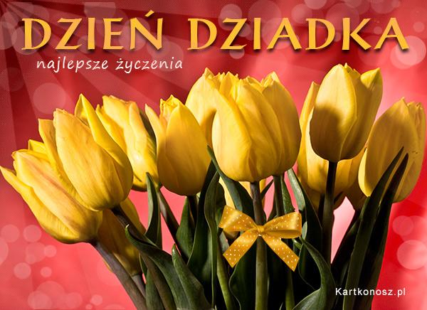 Tulipany dla Dziadka