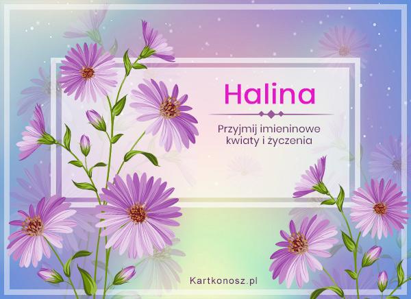 Dzień Imienin Haliny