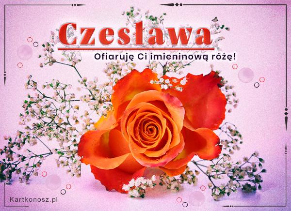 Na imieniny Czesławy!