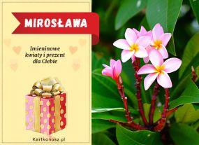 Dzień Imienin Mirosławy