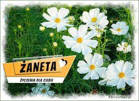 eKartki Imieniny Imieninowe kwiaty dla Żanety,