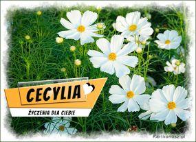 Imieninowe kwiaty dla Cecylii