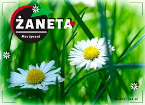Kwiatuszki dla Żanety