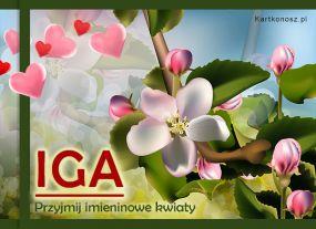 Kwiaty dla Igi