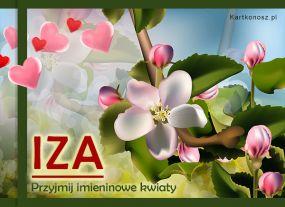 Kwiaty dla Izy