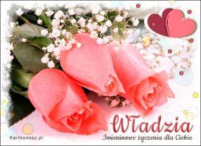 Róże dla Władzi