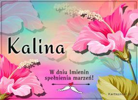 W dniu Imienin Kaliny