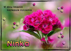 W dniu Imienin Ninki