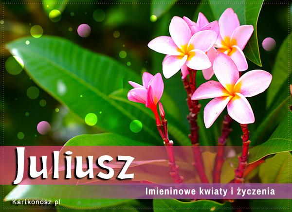 Dzień Imienin Juliusza