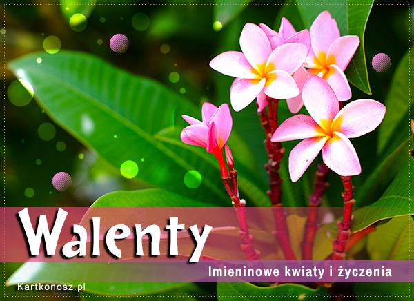 Dzień Imienin Walentego