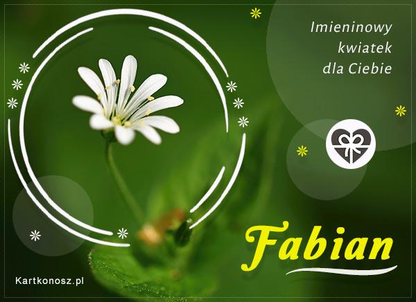 Imieninowy kwiat dla Fabiana