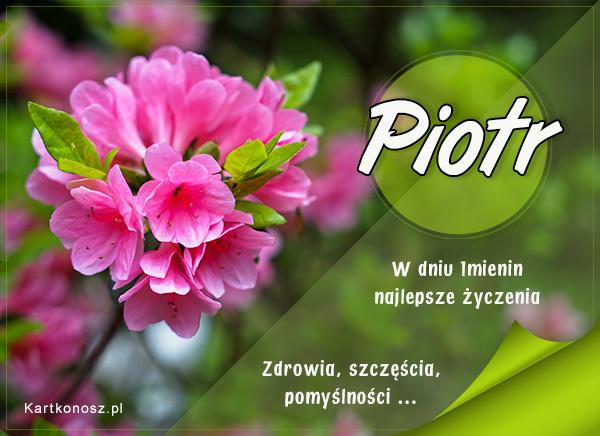 Imieninowy kwiat dla Piotra
