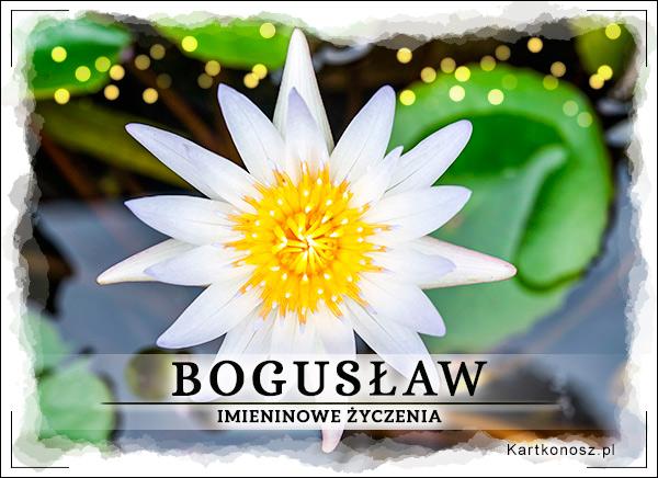 Imieniny Bogusława