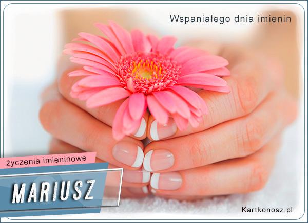 Kwiat dla Mariusza