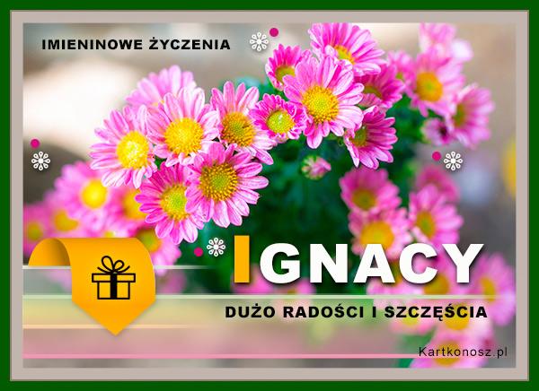 Kwiaty dla Ignacego