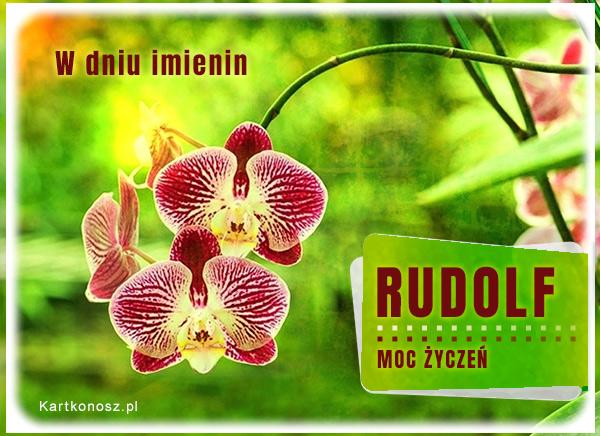 Moc życzeń dla Rudolfa