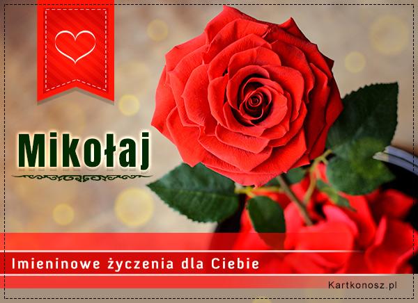 Róża dla Mikołaja