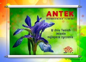 Antek - Kartka Imieninowa