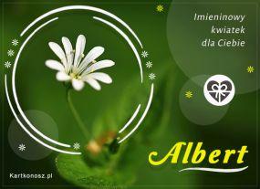 Imieninowy kwiat dla Alberta