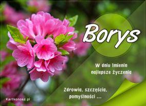 Imieninowy kwiat dla Borysa