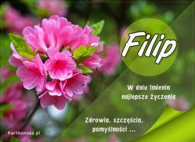 Imieninowy kwiat dla Filipa