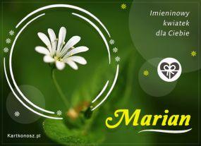 Imieninowy kwiat dla Mariana