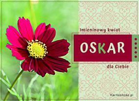 Imieninowy kwiat dla Oskara