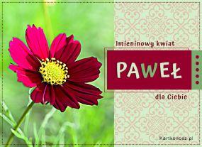 e Kartki  z tagiem: Kartka elektroniczna Imieninowy kwiat dla Pawła,