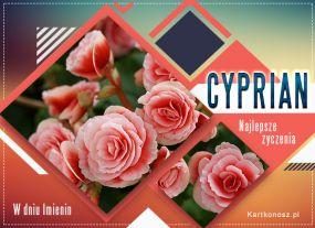 Imieniny Cypriana