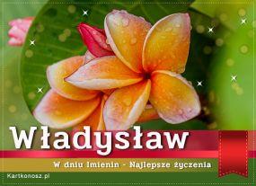 e Kartki Imieniny -> Imienne Męskie Imieniny Władysława,