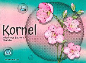 e Kartki  z tagiem: e-Kartki na imieniny Kornel - Kartka Imieninowa,