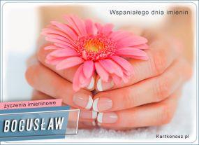 eKartki Imieniny Kwiat dla Bogusława,