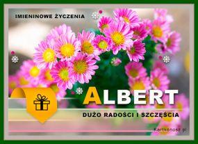 Kwiaty dla Alberta