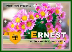 Kwiaty dla Ernesta