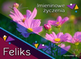 Kwiaty dla Feliksa