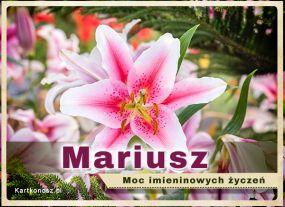 eKartki Imieniny Lilia dla Mariusza,