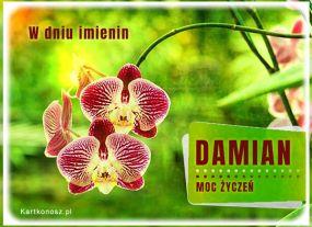 Moc życzeń dla Damiana