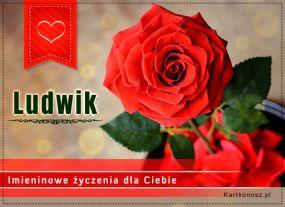 Róża dla Ludwika