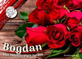 Róże dla Bogdana