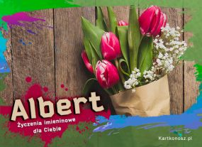 Tulipany dla Alberta