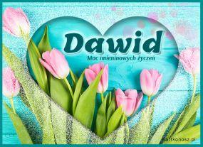 Tulipany dla Dawida