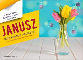 Tulipany dla Janusza